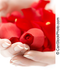 Hands With Petals - Female hands holding red rose petals.