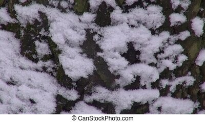 The snow-covered bark of a tree falling snow natural...
