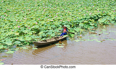 Vietnamese village, row boat, lotus flower, lotus pond -...