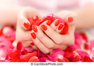 Hands With Petals - Female hands with red nails holding red...