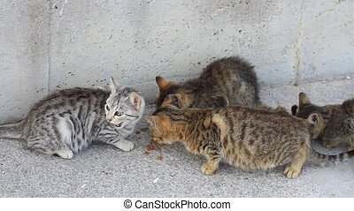 Lovely kittens eating dry cat food