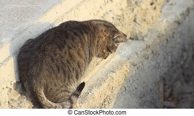 Cat prepared for a jump, leaped out