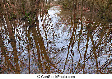 swamp with flooded forest in Ravenna, Italy - swamp with...