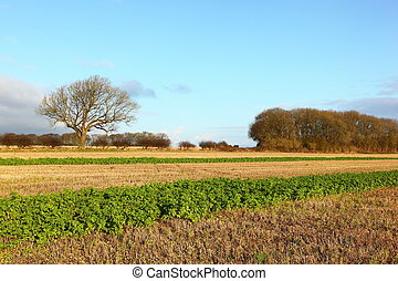 Wolds scenic - Winter fields, hedgerows and trees in a...