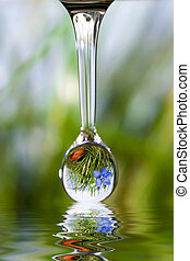 Drop of nature - Drop with reflection of mountain flower