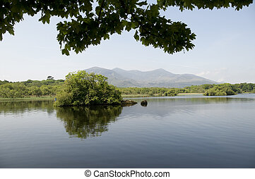 Overhanging Leaves - A picturesque view of a tree in a lake...