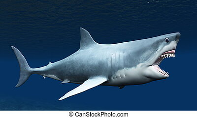shark - image of shark