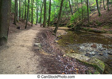 A Walk In The Woods - Hiking trail through a lush forest...