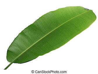 Wrong Side of Banana Leaf isolated on white background