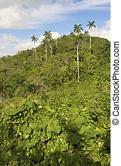 jungle - Escambray mountains in Cuba Island