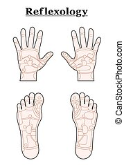 Foot Hand Reflexology Outline - Hands and feet divided into...
