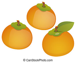 Persimmon - illustration drawing of a orange persimmon...