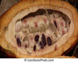 Cocoa pod (Theobroma cacao)