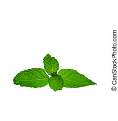 Green mint leaves isolated on a white background - fresh...