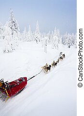 sledge dogging, Sedivaceks long, Czech Republic