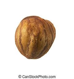 Single Hazelnut - Single whole shelled hazelnut isolated on...