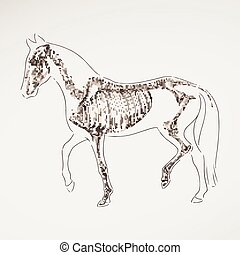 Vector Hand Drawn Horse Skeleton - Vector Illustration of a...