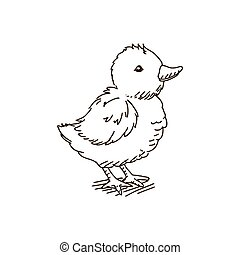 Vector Baby Chicken - Vector Illustration of a Baby Chicken