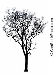 Dead tree silhouette dry oak crown without leafs isolated on...