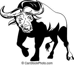 African buffalo on attack - Illustration of an African...