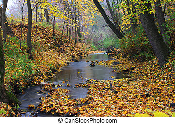 autumn landscape - stream in the autumn forest