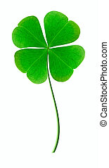 Good luck clover on the white background