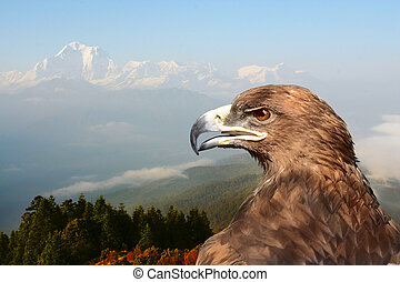 eagle on a background of mountains