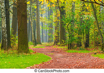 path with fallen leaves in autumn park