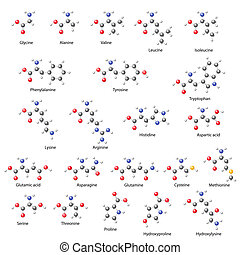 Amino acids - main structural chemical formulas, 3d...