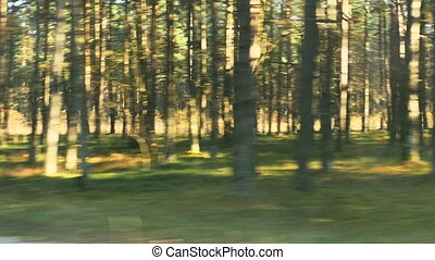 view of trees from fast moving car