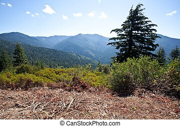 Bear Camp Road is a rugged mountain road traversing the...