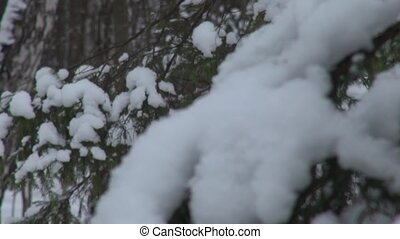 Snow-covered branches of the trees