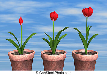 three Tulips in pot - three Tulips in pot on sky background...