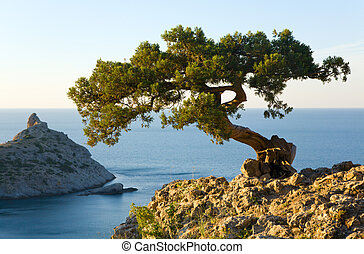 juniper tree on rock and sea with Capchik cape behind Novyj...