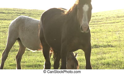 Mares in Bright Sunlight - Beautiful horse grazing on spring...