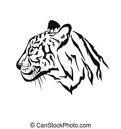 Vector image of an tiger on white background