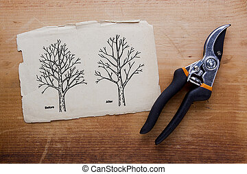 Tree pruning before and after Vector illustration
