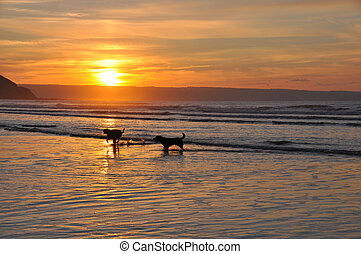 Dogs playng at the coast - dogs playing in the waves at...