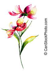 Cosmea flowers, watercolor illustration