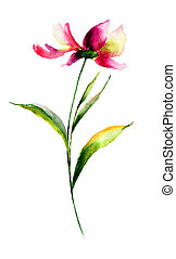 Cosmea flower, watercolor illustration