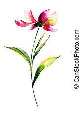 Cosmea flower, watercolor illustration