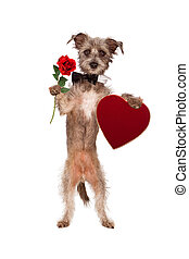Dog Holding Rose and Heart Box of Chocolates - A cute mixed...