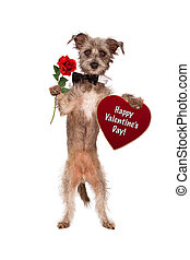 Dog Holding Rose and Valentines Day Heart - A cute mixed...