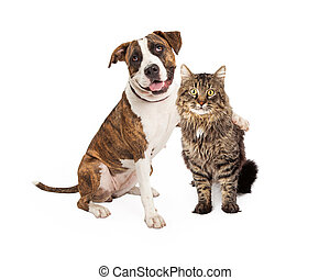 Dog Arm Around Tabby Cat - A Pit Bull dog with her arm...