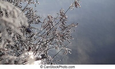 Winter twigs and snowflakes