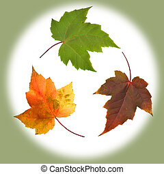 Natures Recycle - A view of leaves and natures recycling...