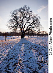 Snow landscape - Park tree covered in snow on a winters day