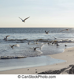 Gulls at the beach - A swarm of young seagulls Larus...