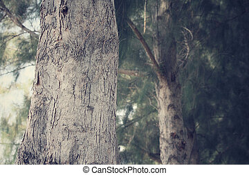 Pine tree - path