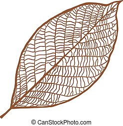 Vector nut leaf, isolated on white background